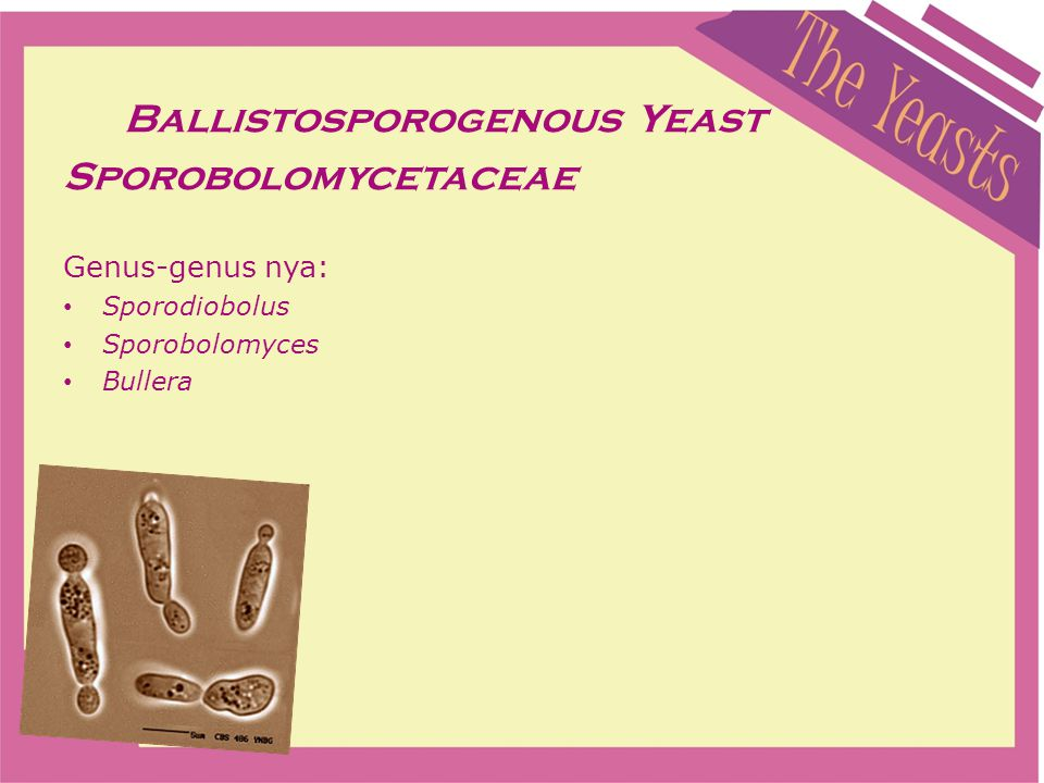 Ballistosporogenous Yeast Sporobolomycetaceae