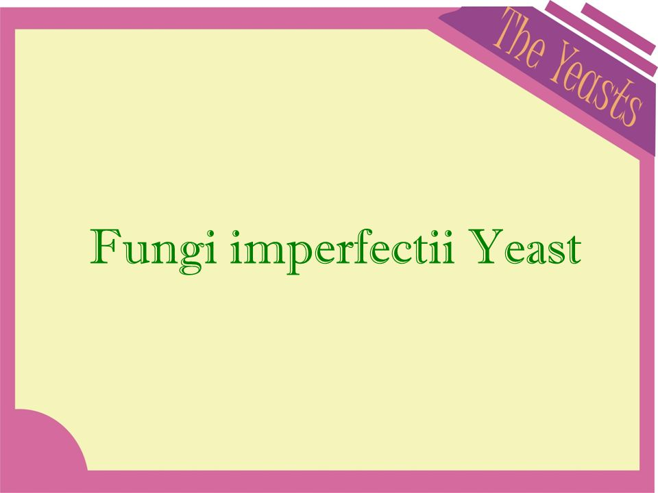Fungi imperfectii Yeast