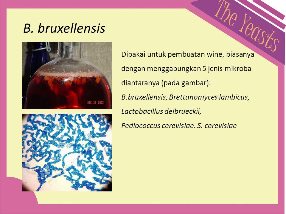 B. bruxellensis Dipakai untuk pembuatan wine, biasanya dengan menggabungkan 5 jenis mikroba. diantaranya (pada gambar):