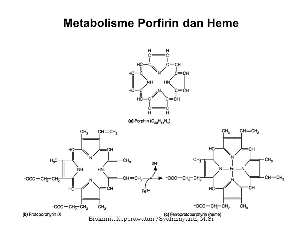 Metabolisme Porfirin dan Heme