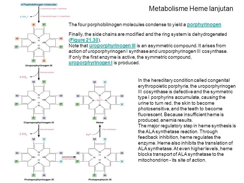 Metabolisme Heme lanjutan