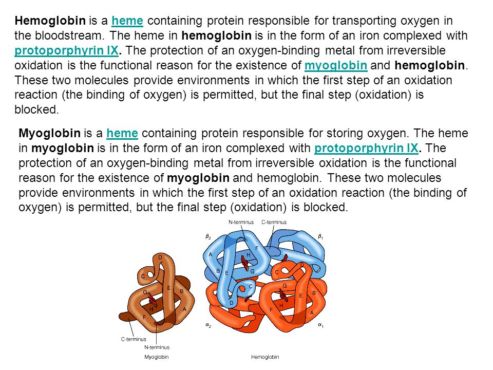 Hemoglobin is a heme containing protein responsible for transporting oxygen in the bloodstream. The heme in hemoglobin is in the form of an iron complexed with protoporphyrin IX. The protection of an oxygen-binding metal from irreversible oxidation is the functional reason for the existence of myoglobin and hemoglobin. These two molecules provide environments in which the first step of an oxidation reaction (the binding of oxygen) is permitted, but the final step (oxidation) is blocked.