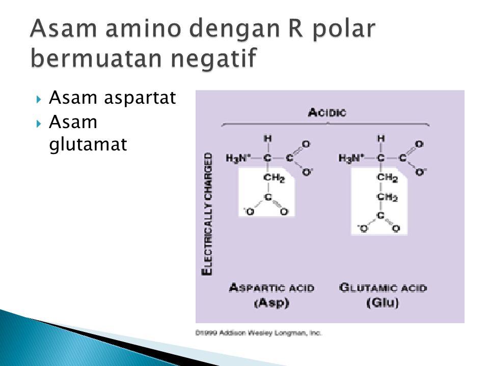 Asam amino dengan R polar bermuatan negatif
