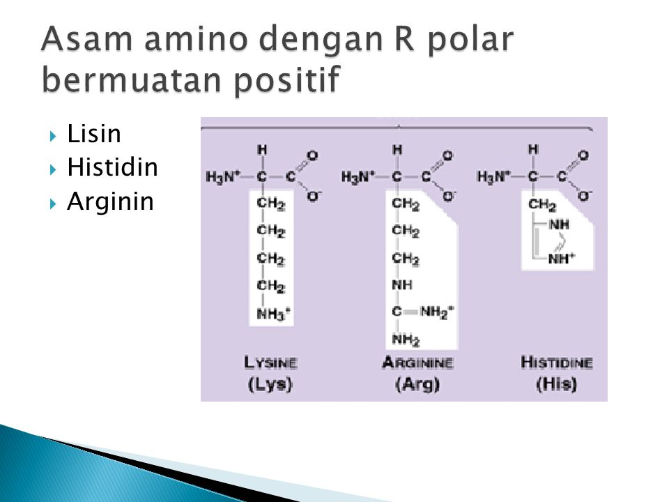 Asam amino dengan R polar bermuatan positif