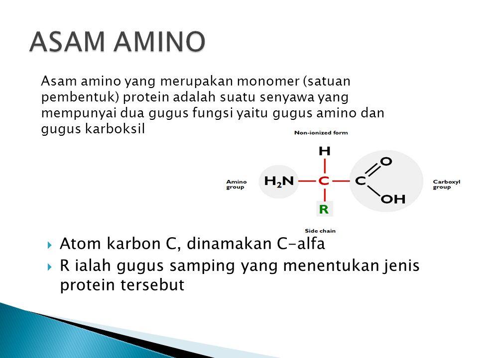 ASAM AMINO Atom karbon C, dinamakan C-alfa