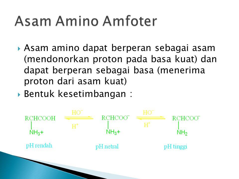 Asam Amino Amfoter
