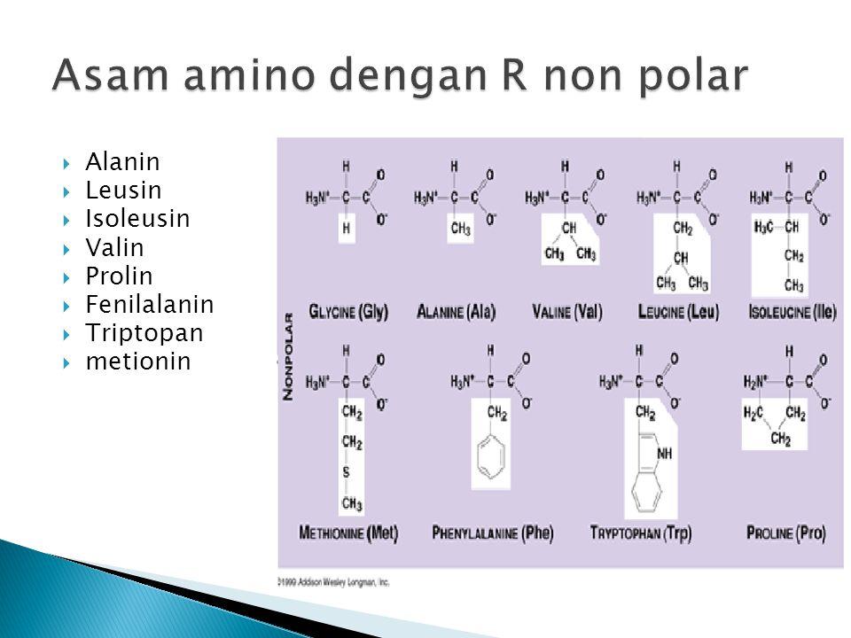 Asam amino dengan R non polar
