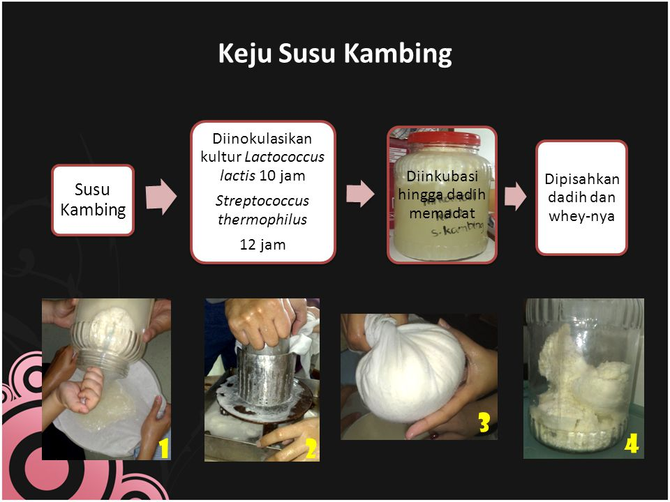 Keju Susu Kambing 3 4 1 2 Susu Kambing
