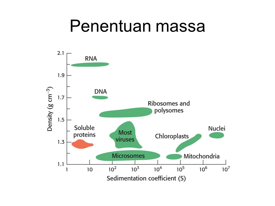 Penentuan massa