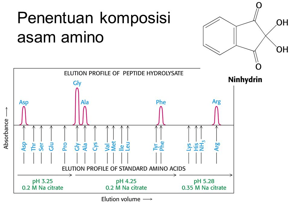 Penentuan komposisi asam amino