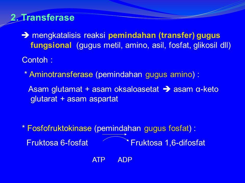 2. Transferase  mengkatalisis reaksi pemindahan (transfer) gugus fungsional (gugus metil, amino, asil, fosfat, glikosil dll)