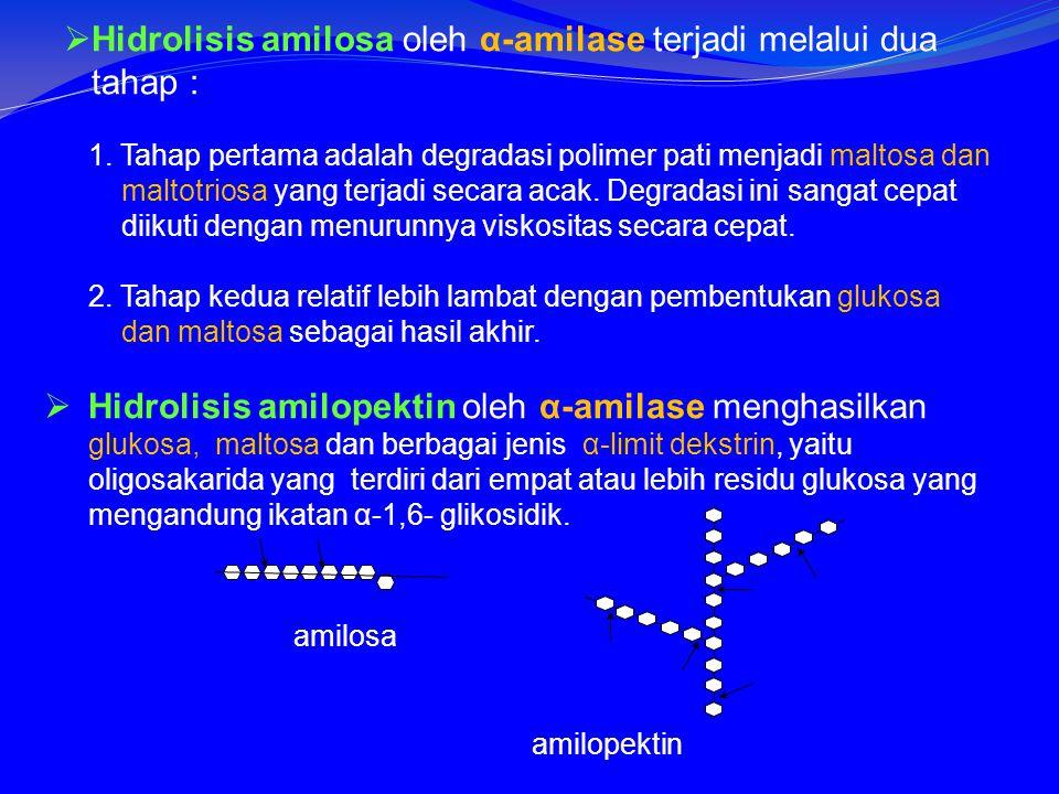 Hidrolisis amilosa oleh α-amilase terjadi melalui dua tahap :