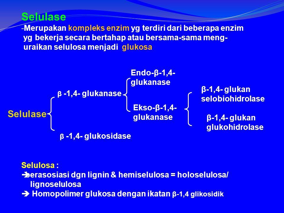 Selulase Merupakan kompleks enzim yg terdiri dari beberapa enzim. yg bekerja secara bertahap atau bersama-sama meng-