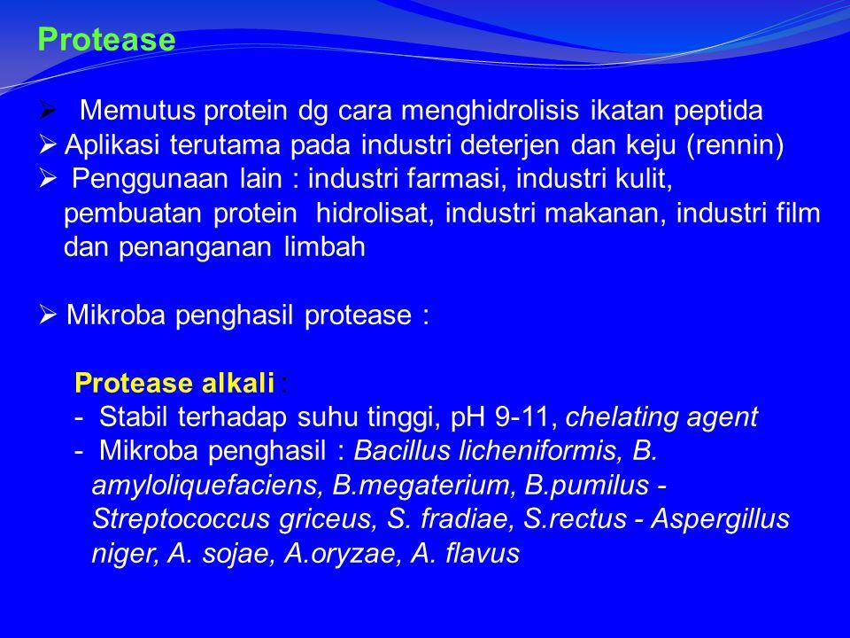 Protease Memutus protein dg cara menghidrolisis ikatan peptida