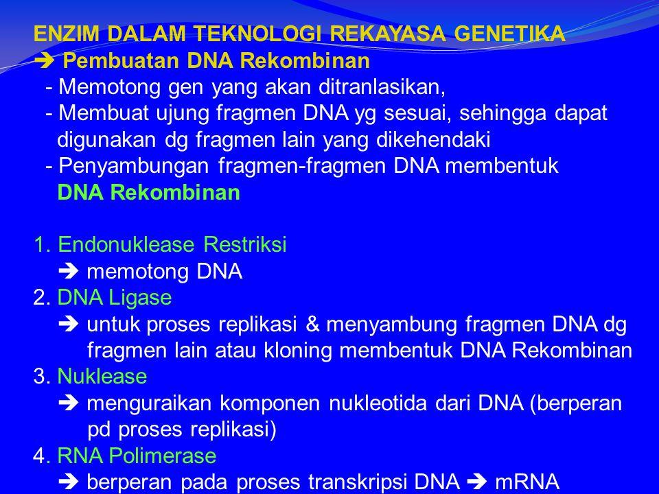 ENZIM DALAM TEKNOLOGI REKAYASA GENETIKA