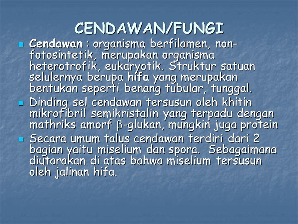 CENDAWAN/FUNGI