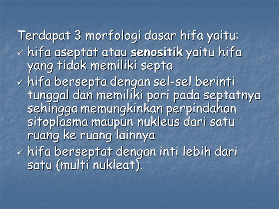 Terdapat 3 morfologi dasar hifa yaitu: