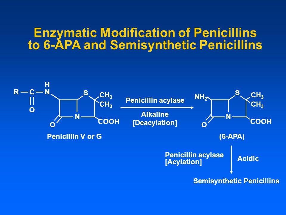 Enzymatic Modification of Penicillins