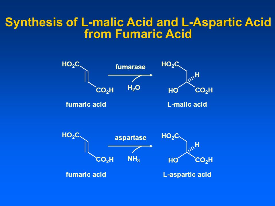 Synthesis of L-malic Acid and L-Aspartic Acid