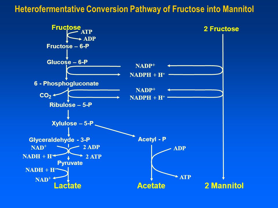 Heterofermentative Conversion Pathway of Fructose into Mannitol