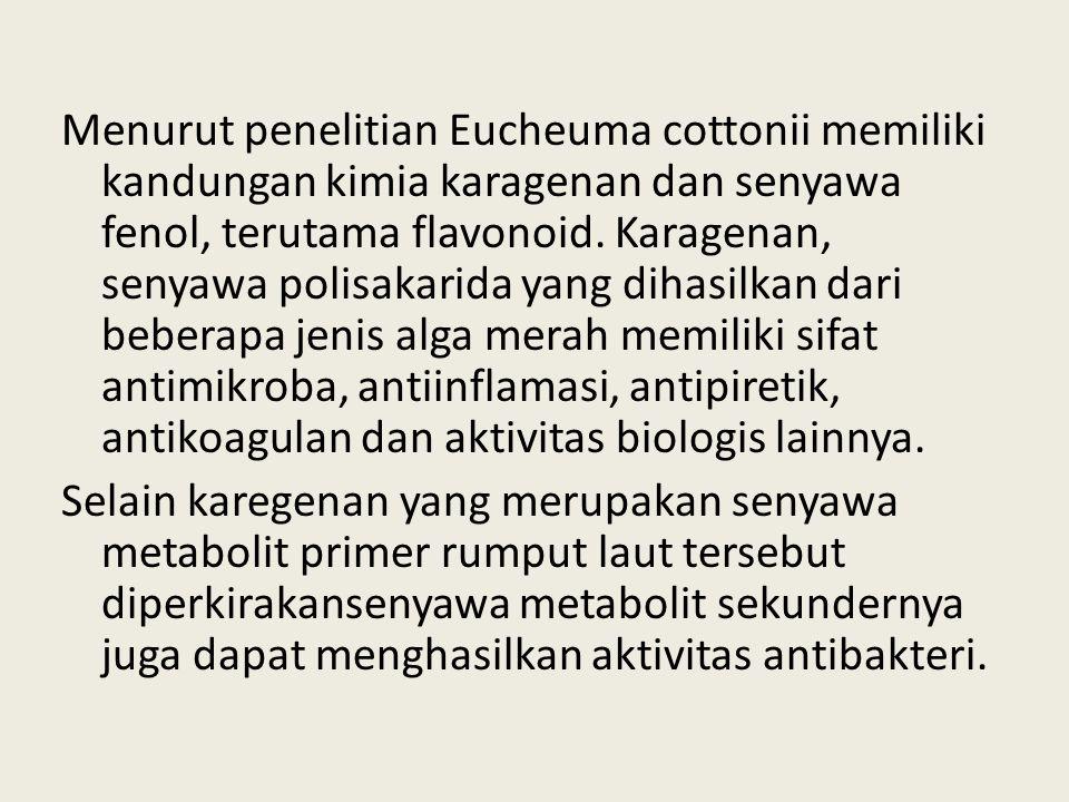 Menurut penelitian Eucheuma cottonii memiliki kandungan kimia karagenan dan senyawa fenol, terutama flavonoid.