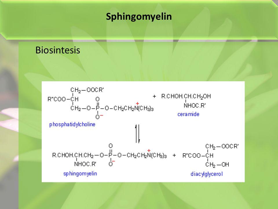 Sphingomyelin Biosintesis