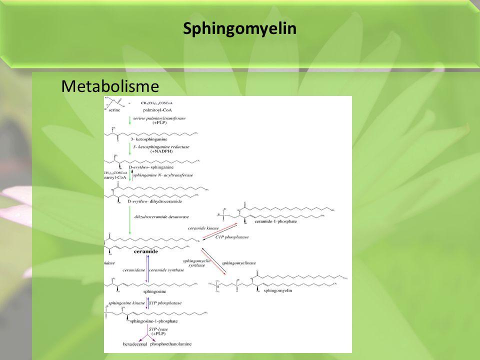 Sphingomyelin Metabolisme