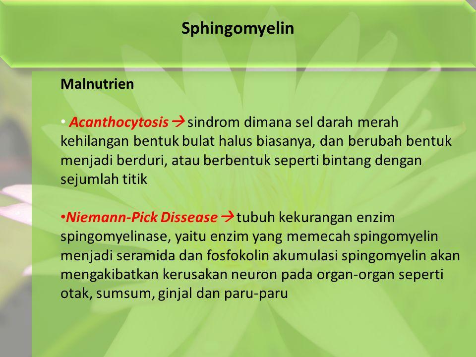 Sphingomyelin Malnutrien