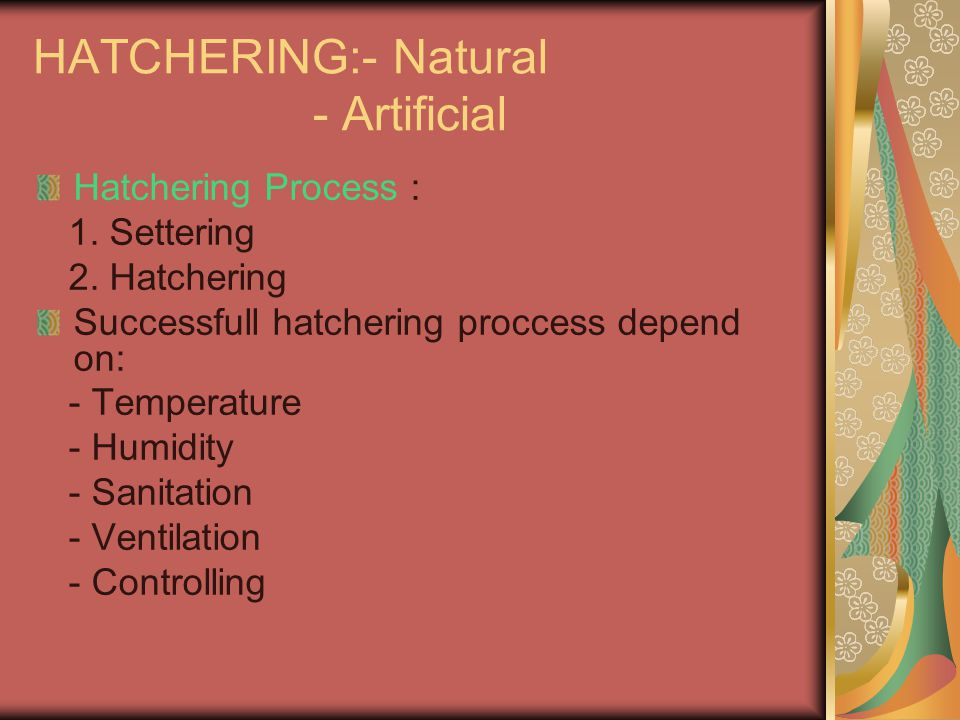 HATCHERING:- Natural - Artificial