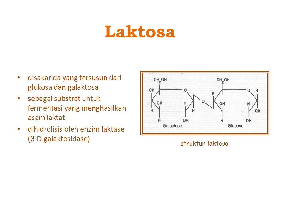 Laktosa disakarida yang tersusun dari glukosa dan galaktosa
