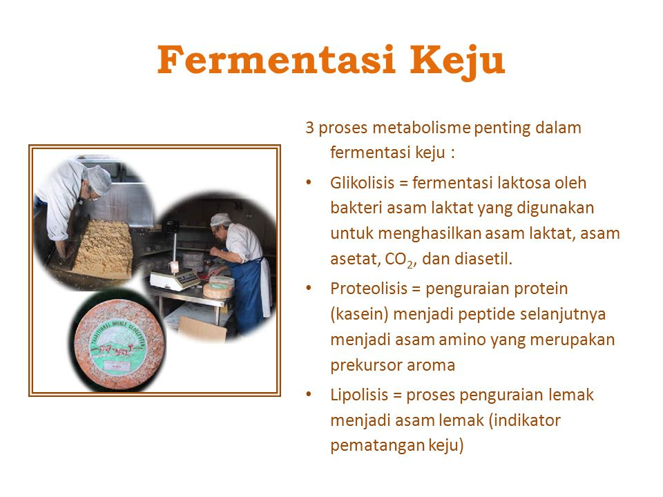 Fermentasi Keju 3 proses metabolisme penting dalam fermentasi keju :