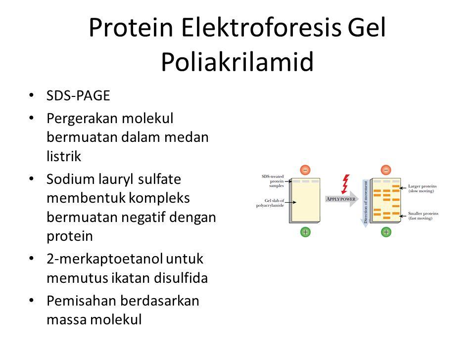 Protein Elektroforesis Gel Poliakrilamid