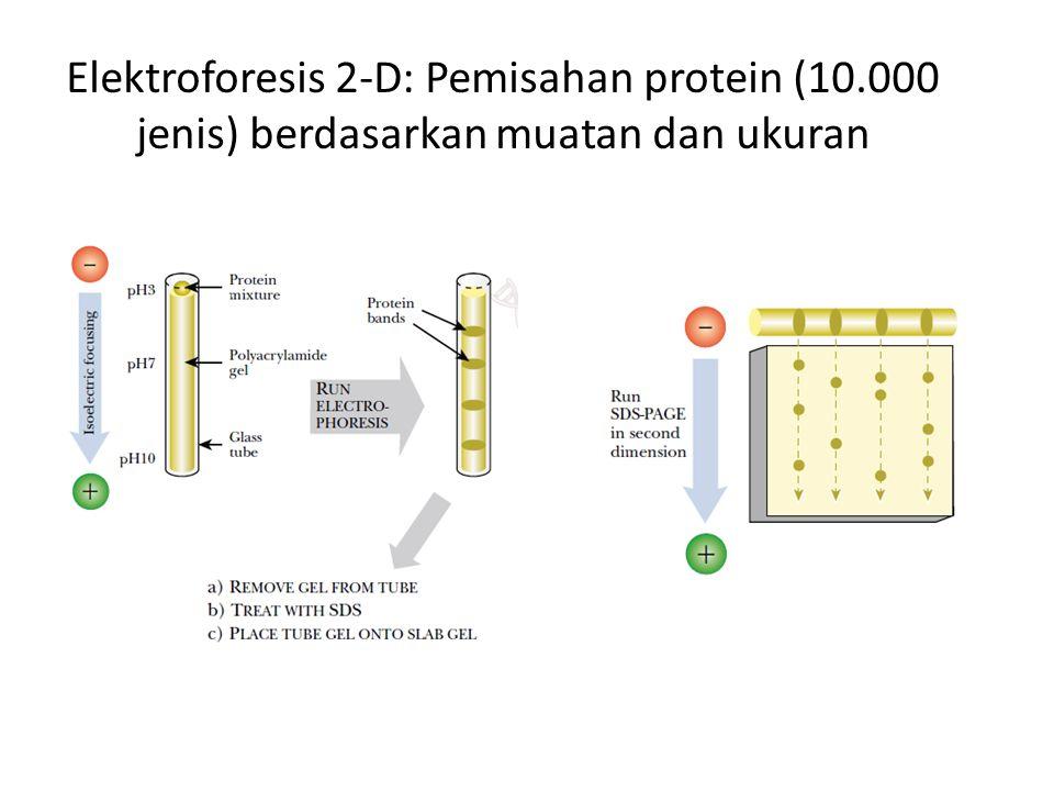 Elektroforesis 2-D: Pemisahan protein (10