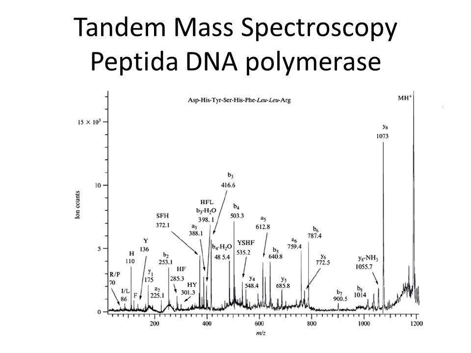 Tandem Mass Spectroscopy Peptida DNA polymerase