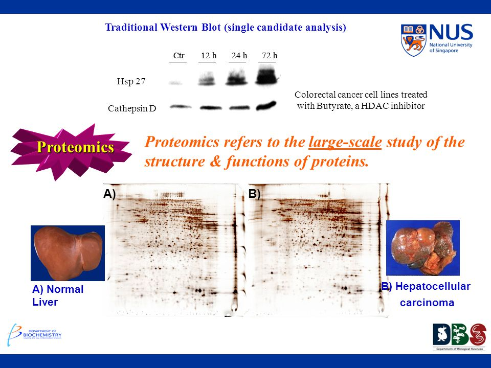 Traditional Western Blot (single candidate analysis)
