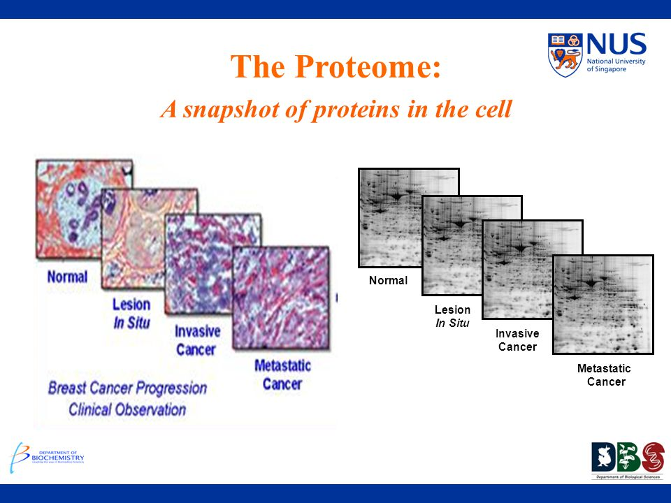 A snapshot of proteins in the cell
