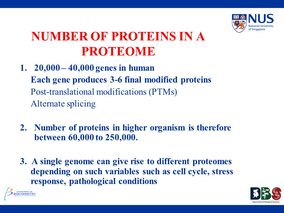 NUMBER OF PROTEINS IN A PROTEOME