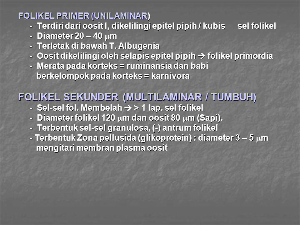FOLIKEL SEKUNDER (MULTILAMINAR / TUMBUH)