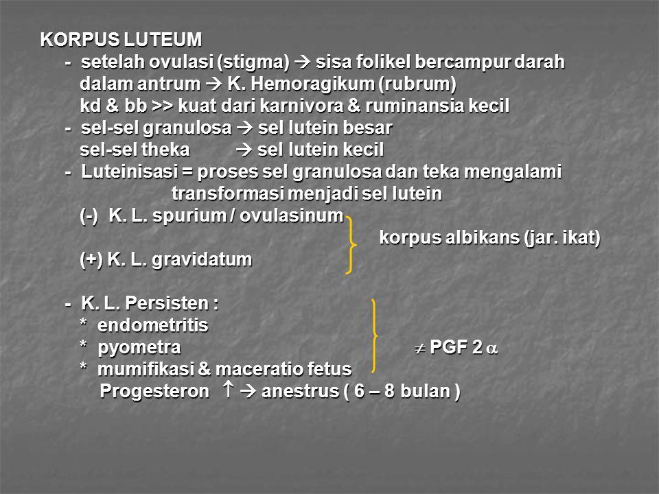 KORPUS LUTEUM - setelah ovulasi (stigma)  sisa folikel bercampur darah. dalam antrum  K. Hemoragikum (rubrum)
