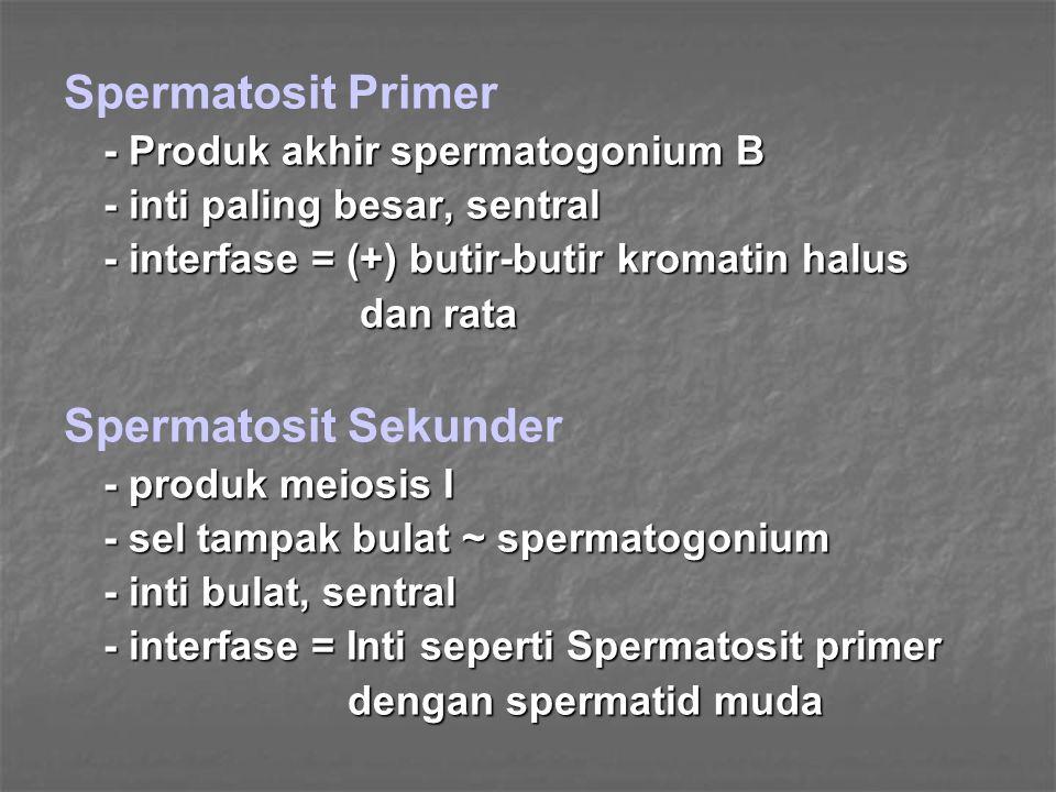 Spermatosit Primer Spermatosit Sekunder