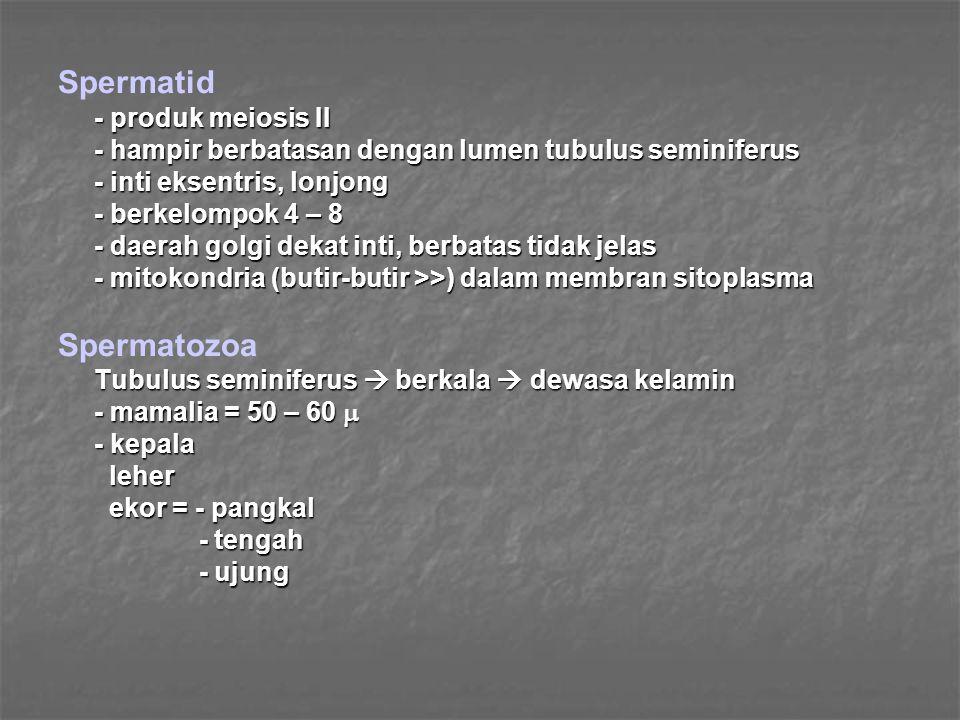 Spermatid Spermatozoa - produk meiosis II