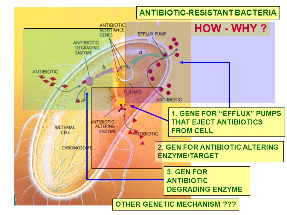 HOW - WHY ANTIBIOTIC-RESISTANT BACTERIA 1. GENE FOR EFFLUX PUMPS