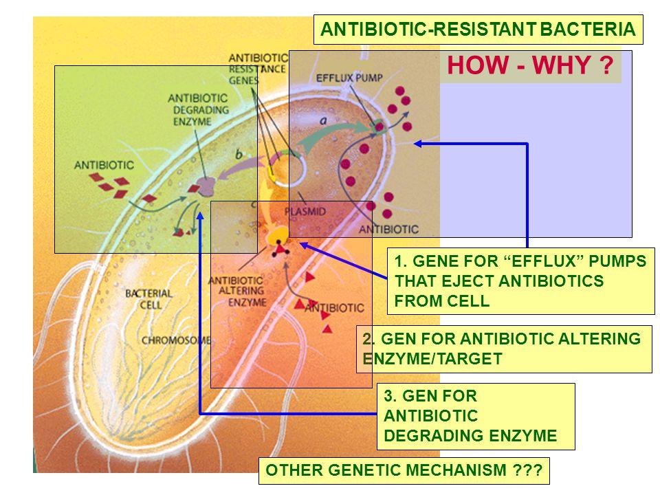 HOW - WHY ANTIBIOTIC-RESISTANT BACTERIA 1. GENE FOR EFFLUX PUMPS