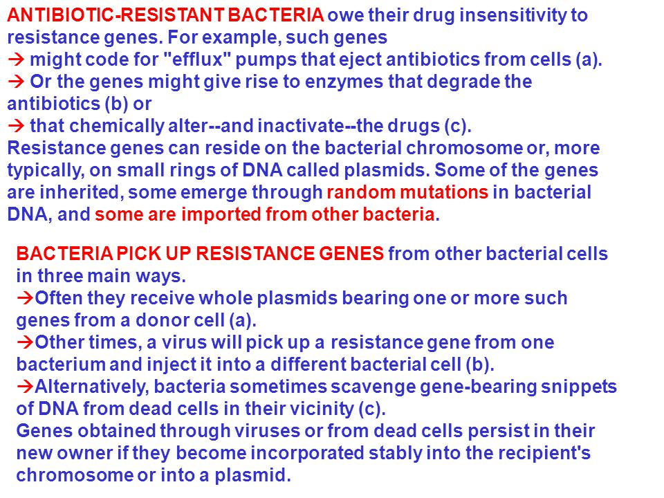 ANTIBIOTIC-RESISTANT BACTERIA owe their drug insensitivity to resistance genes. For example, such genes