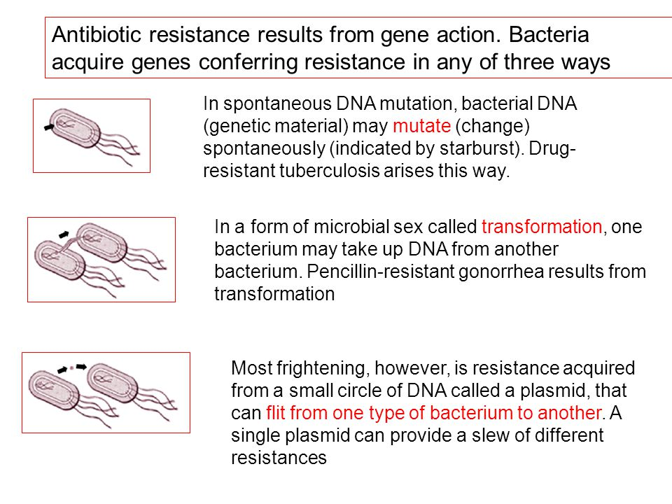Antibiotic resistance results from gene action