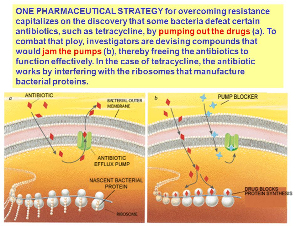 ONE PHARMACEUTICAL STRATEGY for overcoming resistance capitalizes on the discovery that some bacteria defeat certain antibiotics, such as tetracycline, by pumping out the drugs (a).
