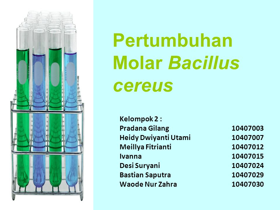Pertumbuhan Molar Bacillus cereus