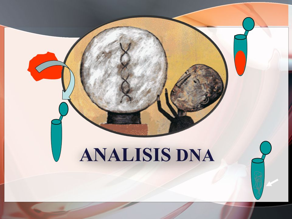Analisis dna