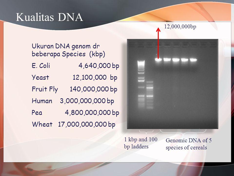 Kualitas DNA Ukuran DNA genom dr beberapa Species (kbp)
