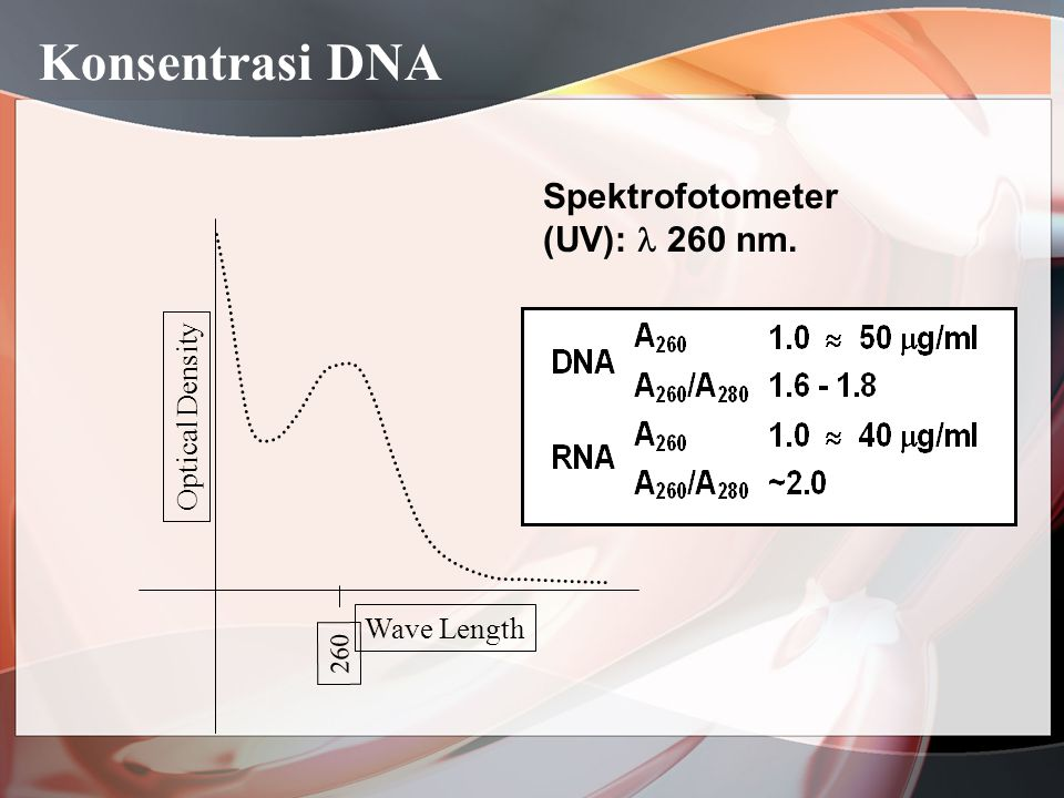Konsentrasi DNA Spektrofotometer (UV):  260 nm. Optical Density